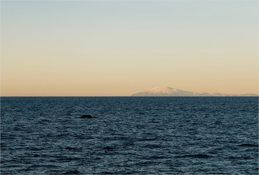 Humpback whale -- Off the coast of Reykjavik